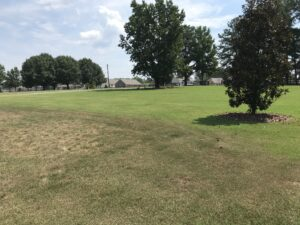 drought stressed turfgrass