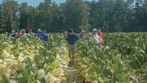 Cover photo for Organic Commodities Field Day | August 4, 2021 | Goldsboro, NC