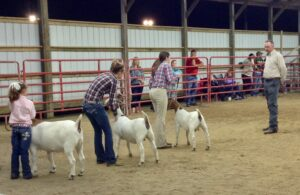 Cover photo for 4-H Youth Livestock Show at the Pitt County Fair